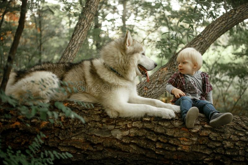Little boy sits on tree trunk next to lying dog malamute. Little boy sits on fallen tree trunk in forest next to lying dog malamute royalty free stock images