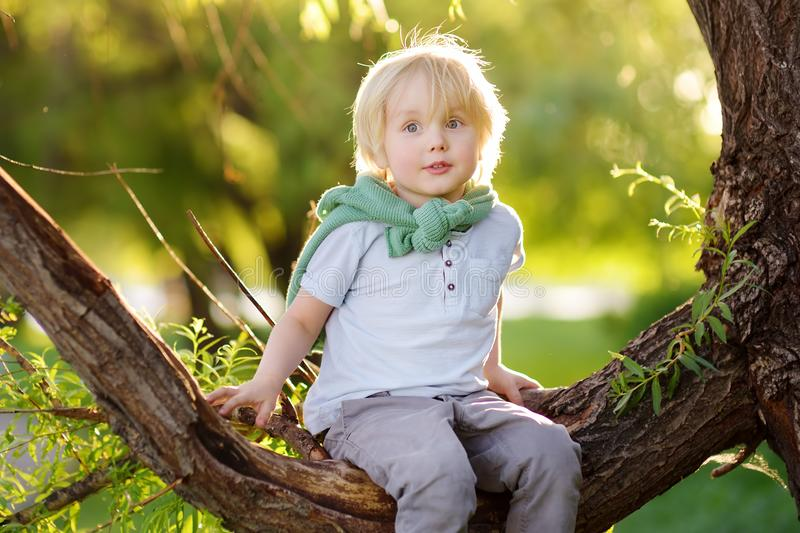 Little boy is sitting on a branch of big tree and is dreaming. Child`s games. Active family time on nature. Hiking with kids. Little boy is sitting on a branch royalty free stock photos