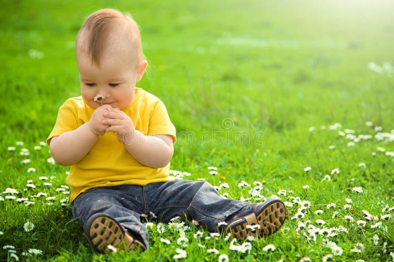 Little boy is sitting on green meadow stock image