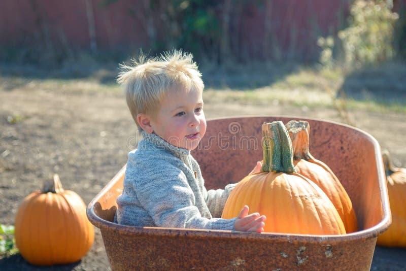 Little boy sitting inside wheelbarrow at field pumpkin patch. Little boy in knitted jacket sitting ine old wheelbarrow at farm field, holding pumpkin royalty free stock image