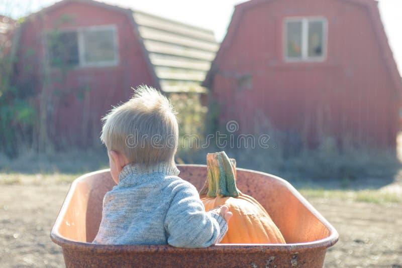 Little boy sitting inside wheelbarrow at field pumpkin patch. Little boy in knitted jacket sitting inside old wheelbarrow at farm field, choosing pumpkin royalty free stock image