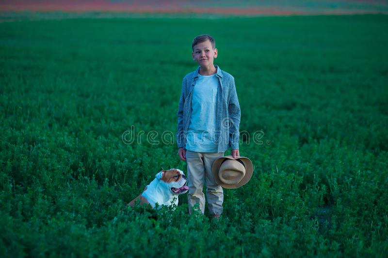 Little boy sitting standing with his english bull dog on the meadow of green rye. Handsom kid posing with best friend wearing. Stylish clothes and rustic retro royalty free stock image