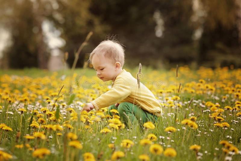 Little boy on the spring meadow royalty free stock photography