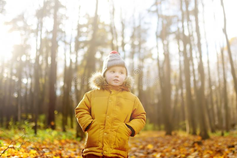 Little boy during stroll in the forest at cold sunny autumn day. Active family time on nature. Hiking with little kids royalty free stock photography