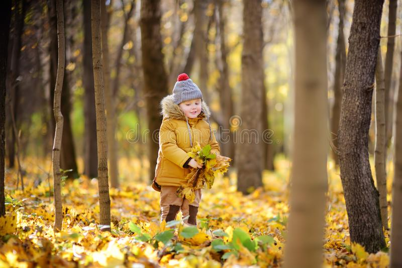 Little boy during stroll in the forest at cold sunny autumn day. Active family time on nature. Hiking with little kids royalty free stock images