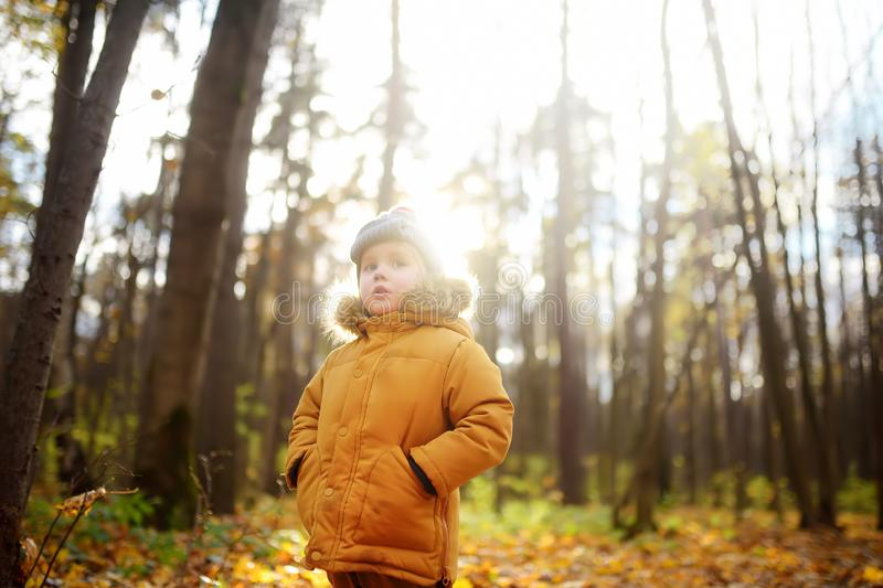Little boy during stroll in the forest at cold sunny autumn day. Active family time on nature. Hiking with little kids stock photos