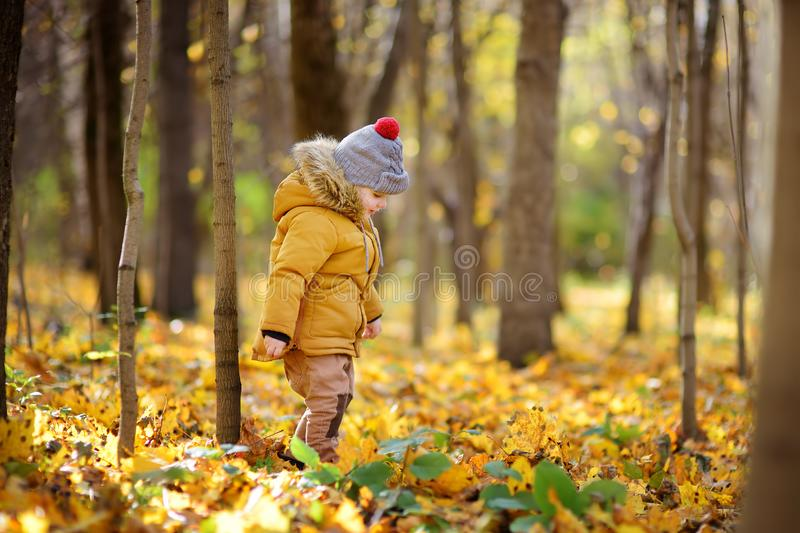 Little boy during stroll in the forest at cold sunny autumn day. Active family time on nature. Hiking with little kids stock image