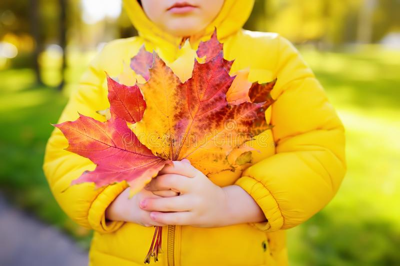 Little boy during stroll in the forest at sunny autumn day. Active family time on nature. Child holding hand maple leaves stock photography