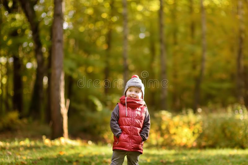 Little boy during stroll in the forest at sunny autumn day stock image