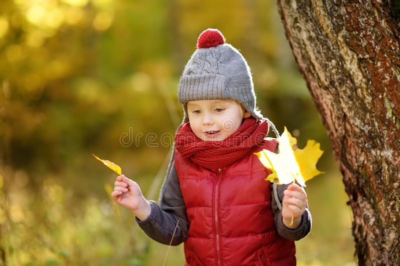 Little boy during stroll in the forest at sunny autumn day stock photo