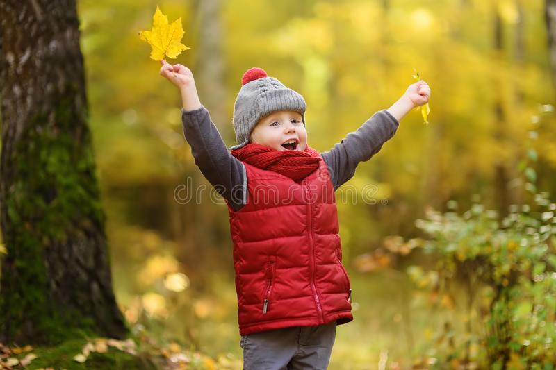 Little boy during stroll in the forest at sunny autumn day stock photos