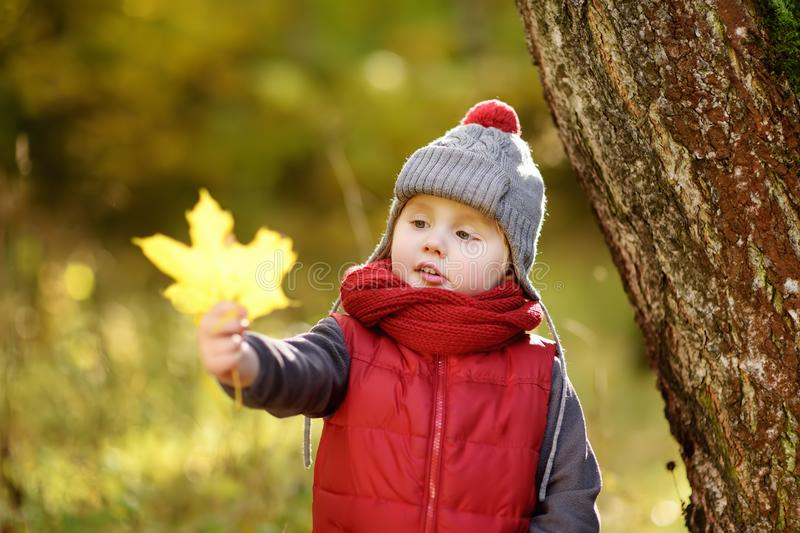 Little boy during stroll in the forest at sunny autumn day stock images