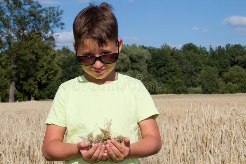 Little boy in the cornfield stock photos
