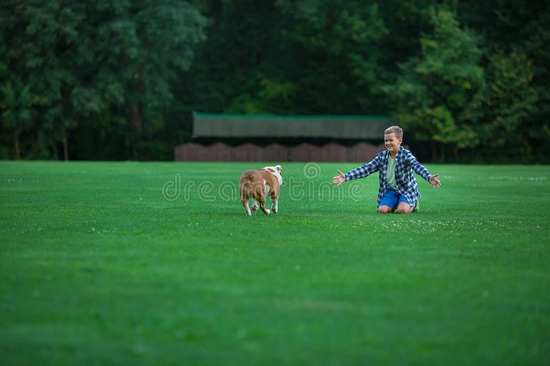 Little boy teenager with his dog bulldog in park on a sunny day on green grass park land enjoy life together with his friend.  stock photography