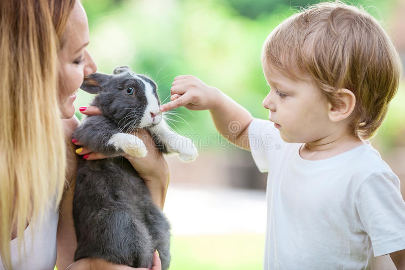 Little boy touching pet rabbit's nose while stock photography