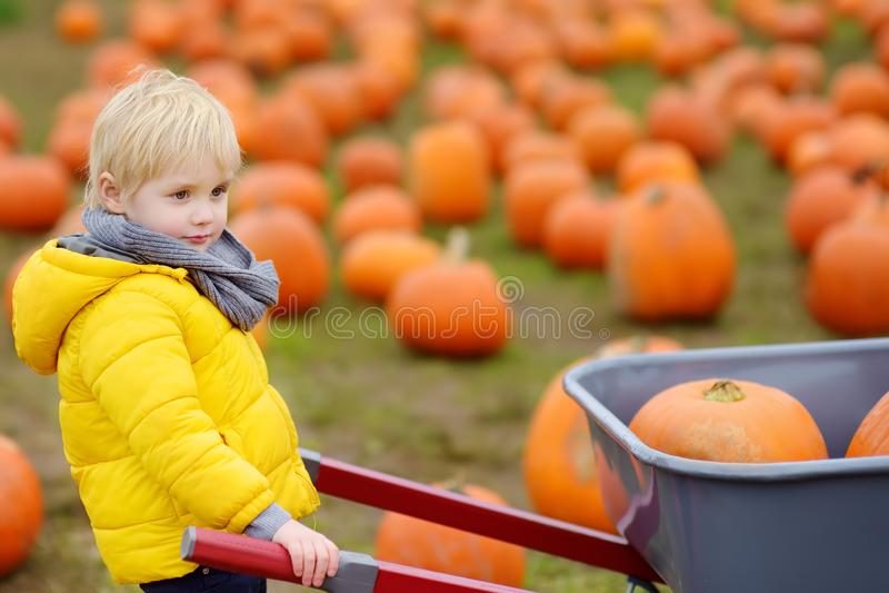 Little boy on a tour of a pumpkin farm at autumn. Child carries a wheelbarrow with pumpkins stock image