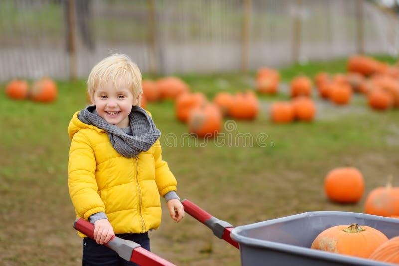 Little boy on a tour of a pumpkin farm at autumn. Child carries a wheelbarrow with pumpkins royalty free stock photo