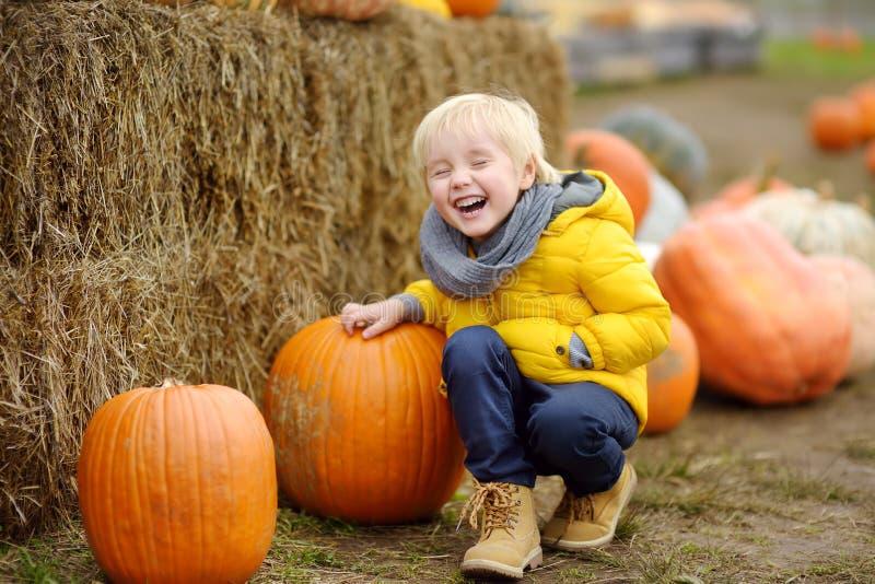 Little boy on a tour of a pumpkin farm at autumn. Child sitting near giant pumpkin stock photos
