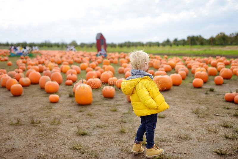 Little boy on a tour of a pumpkin farm at autumn. Child standing on large field with giant pumpkin royalty free stock image