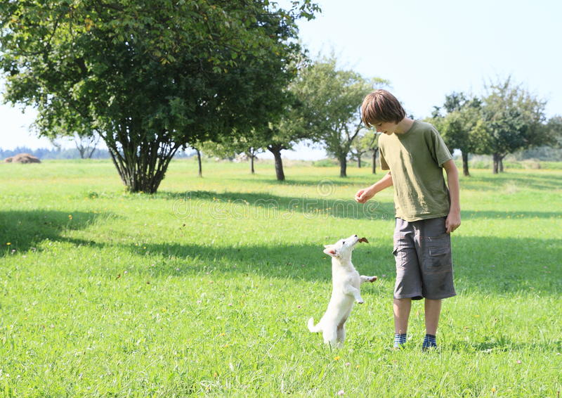 Little boy training a dog royalty free stock photo