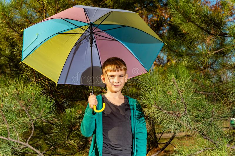 A little boy are under a bright multi-colored umbrella in a pine forest stock photography