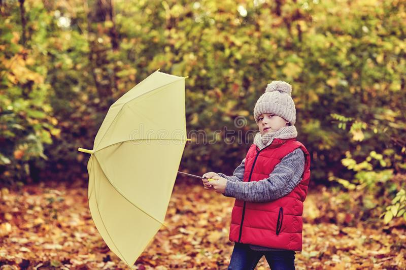 Little boy on a walk in the autumn forest royalty free stock photography