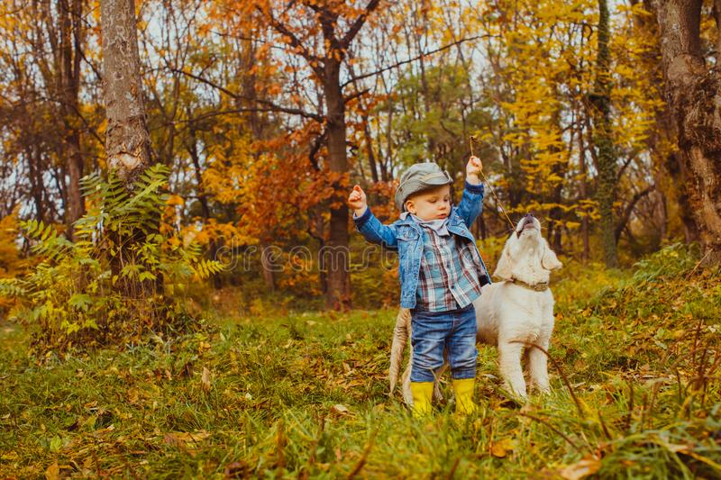 Little boy walking with golden retriever puppy. In the park royalty free stock photos
