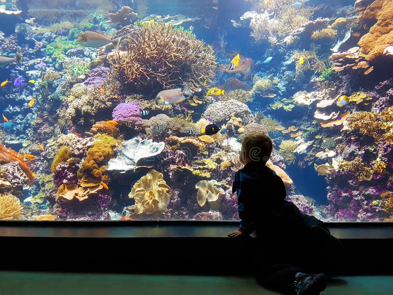 Little boy watching exotic fishes and corals stock photography