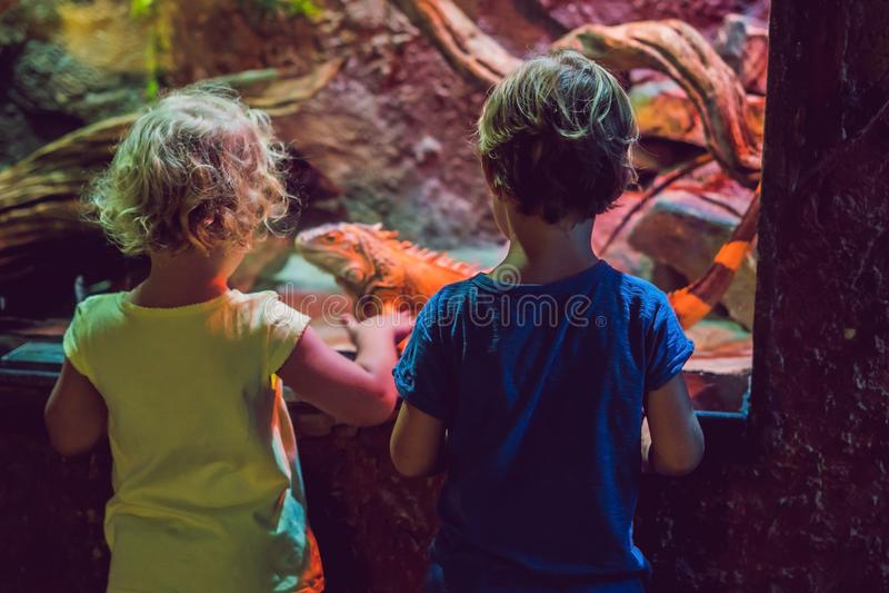Little Boy y muchacha que miran pescados coralinos tropicales en li grande del mar fotografía de archivo