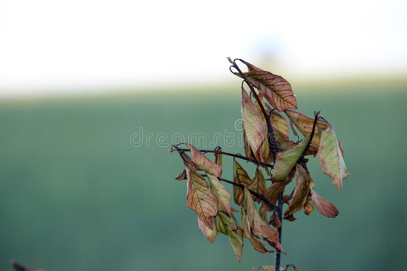 Little branch with dead leaves at autumn, late summer. Photo. Little branch with dead leaves at autumn, late summer stock image