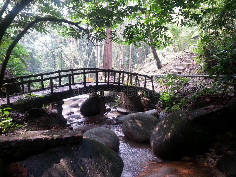 Little bridges, flowing waters, and the forest view. stock photo