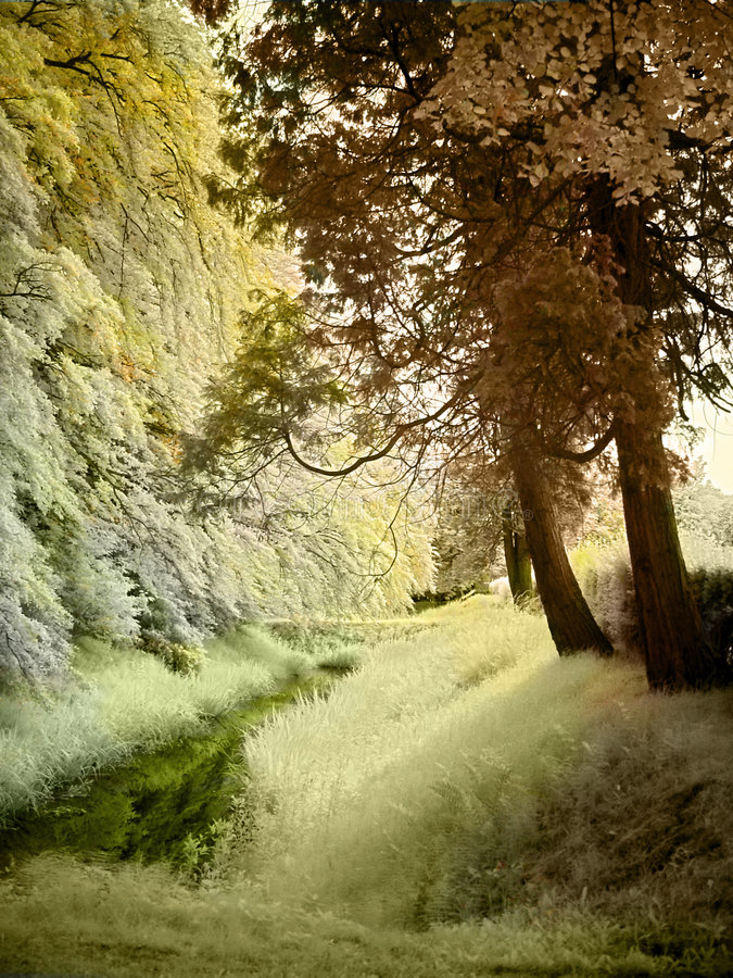 Free Little Brook In Infrared Royalty Free Stock Images - 2840189
