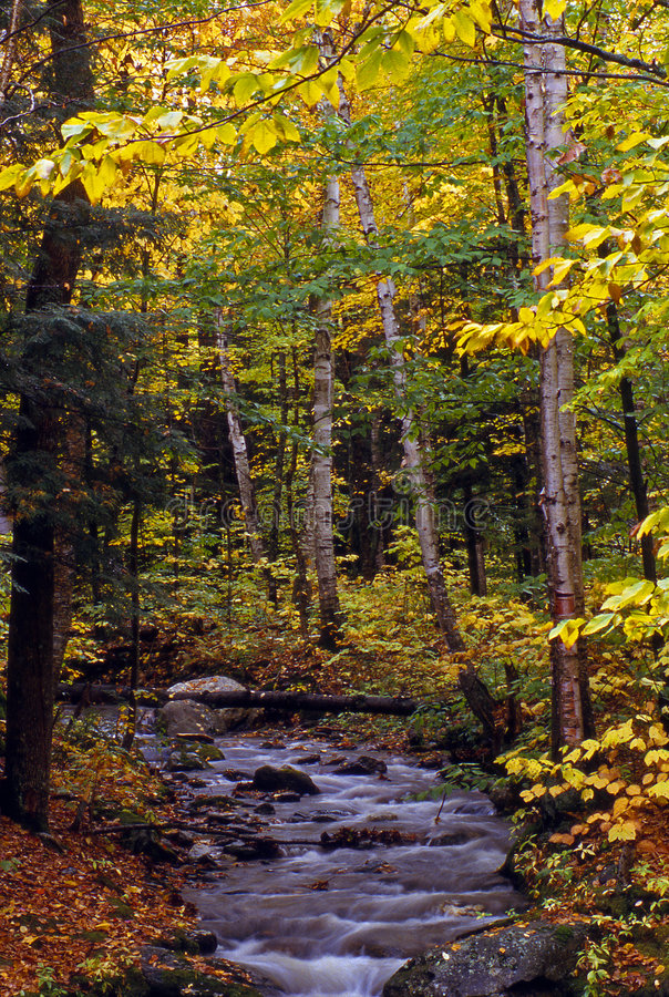 Free Little Brook With Fall Colors Royalty Free Stock Image - 4987116