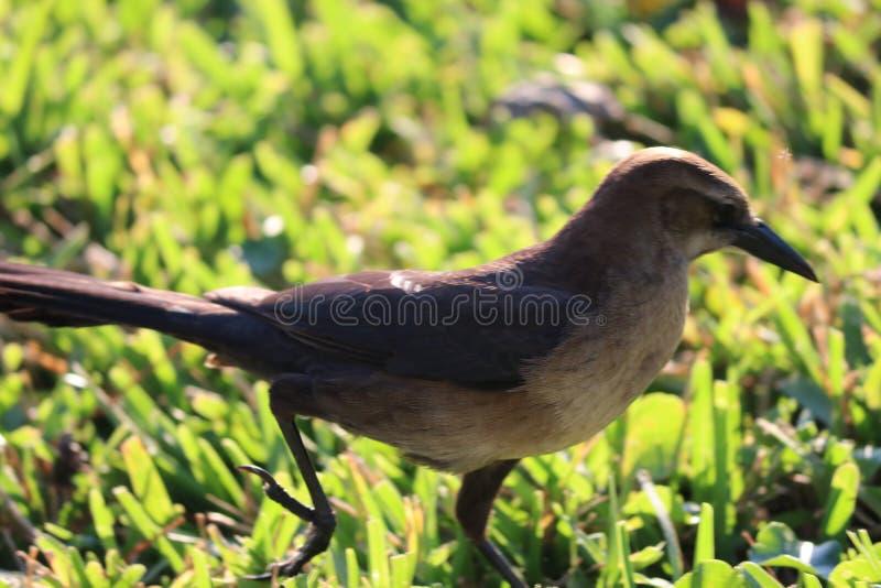 Little brown bird. stock photo