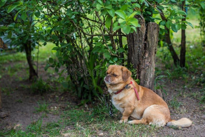 Little brown dog near tree stock image