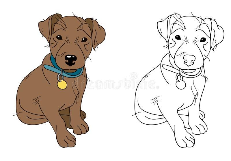 Little brown puppy wearing blue dog collar stock photo
