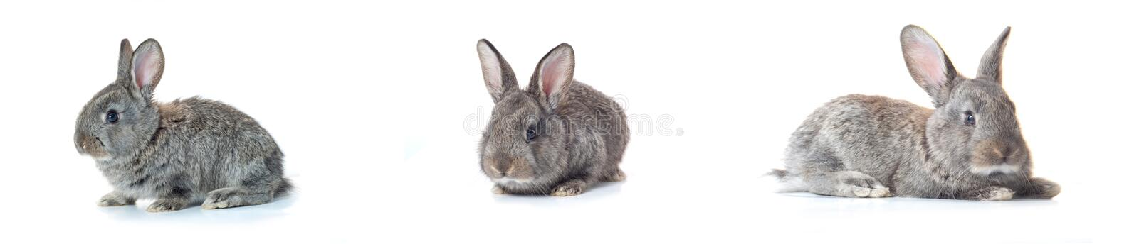 Little bunny stock images