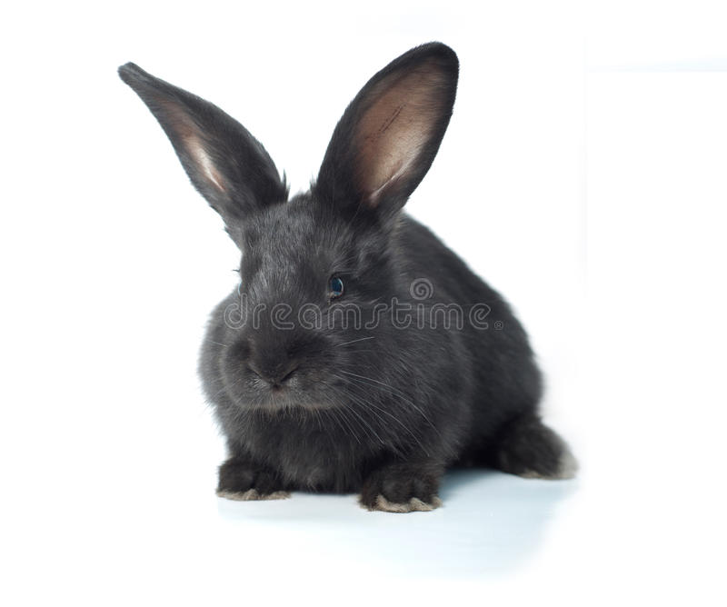 Download Little bunny stock photo. Image of ears, friendly, happy - 24741472