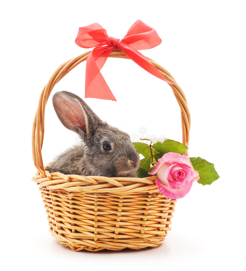 Little bunny in a basket. royalty free stock photography