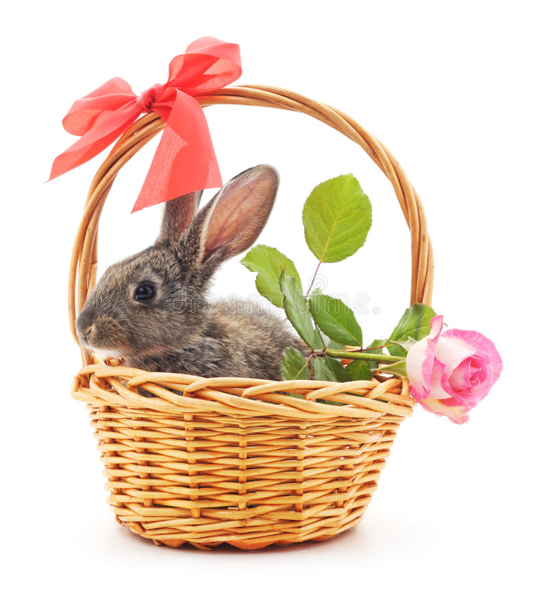 Little bunny in a basket. stock photography