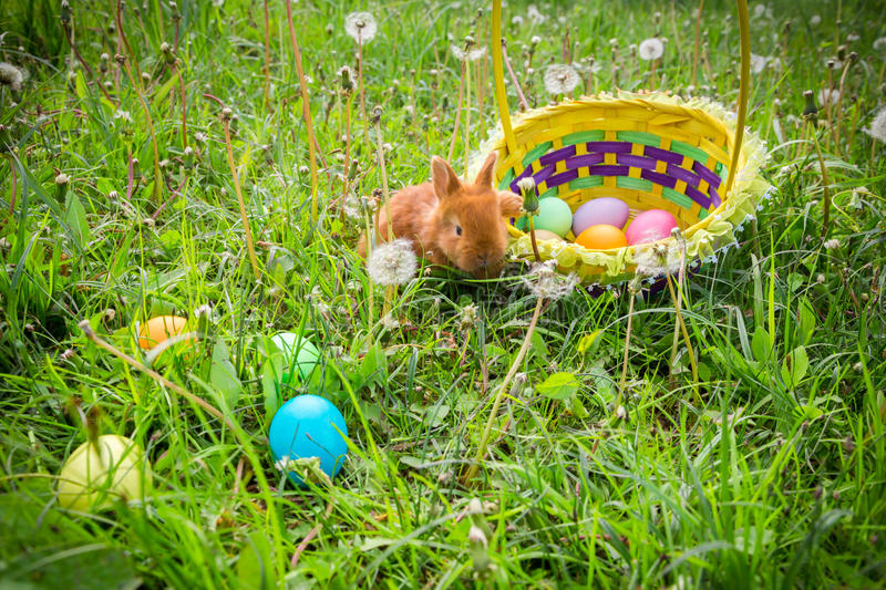 Little bunny on green meadow with colorful easter eggs royalty free stock image