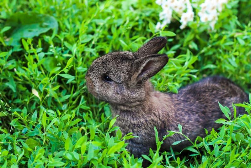 Little fluffy rabbit lurking in the green grass. stock photo