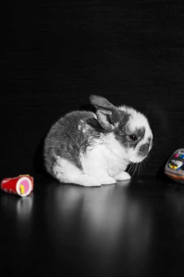 Little bunny sleeping stock photos