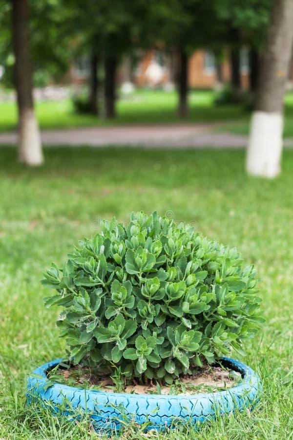 Download Little bush stock photo. Image of grass, park, shrub - 31369954