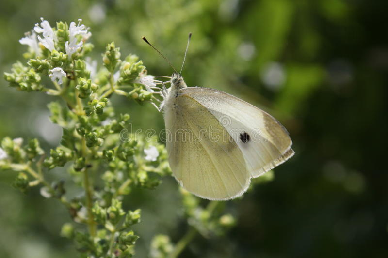 Download Little Butterfly Stock Image - Image: 26901231