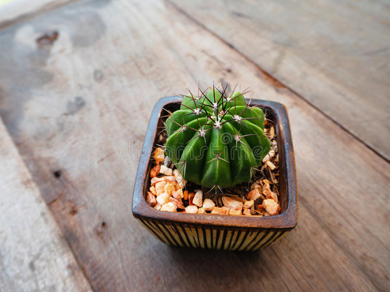 Little cactus royalty free stock images