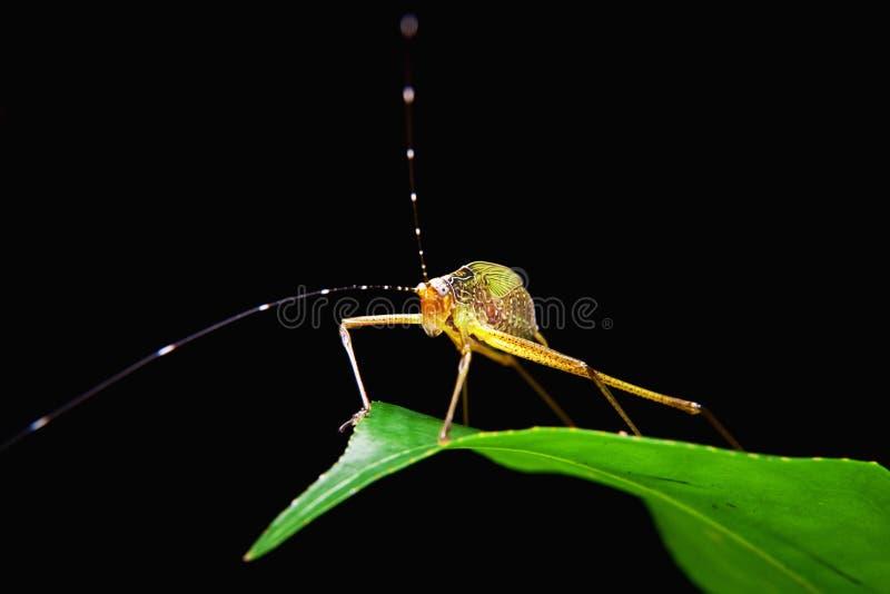 Download Little Capricorn Beetle Closeup Stock Image - Image: 22313335