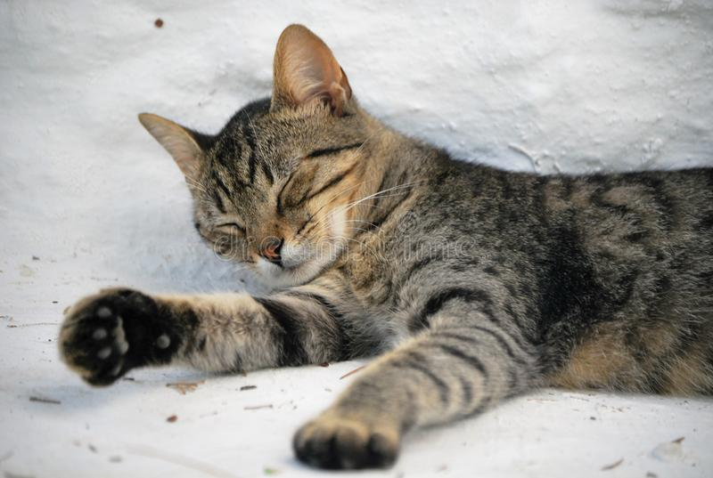 A little cat sleeping on the stairs stock images
