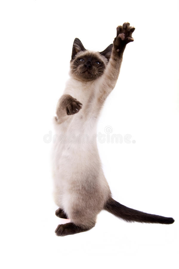 Little cat. On white background stock image