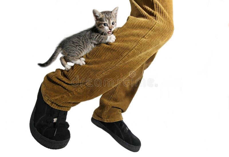 Little cat. Climb on leg royalty free stock images